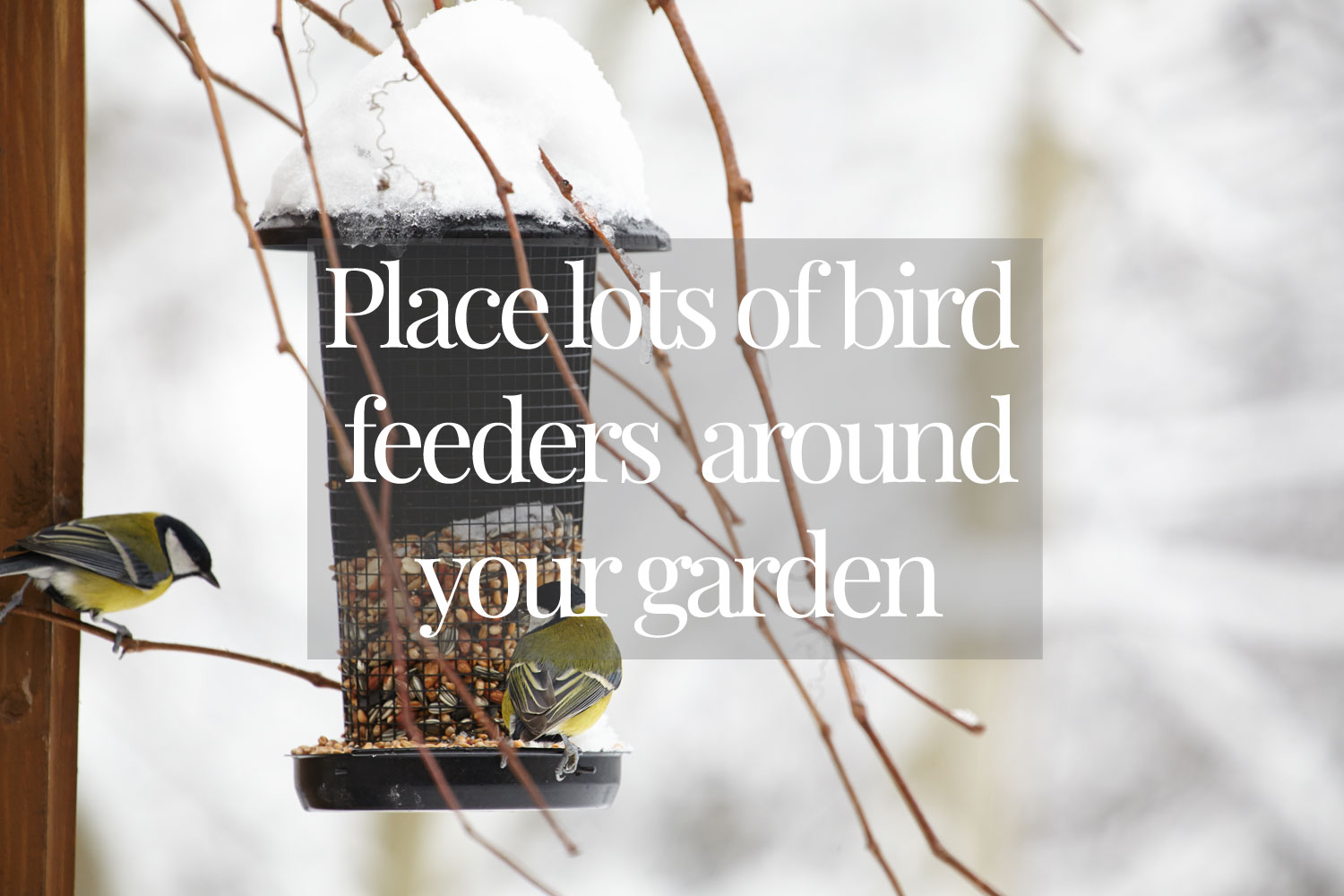 Place-lots-of-bird-feeders-around-your-garden-at-strategic-areas-no-tex