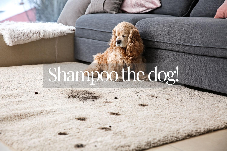 shampoo-the-dog